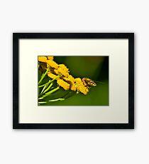 Seeking the Nectar Framed Print