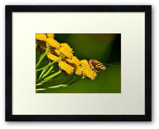Seeking the Nectar by Trevor Kersley
