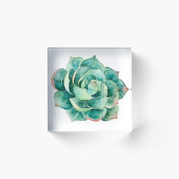 Watercolor Succulent sticker   Acrylic Block
