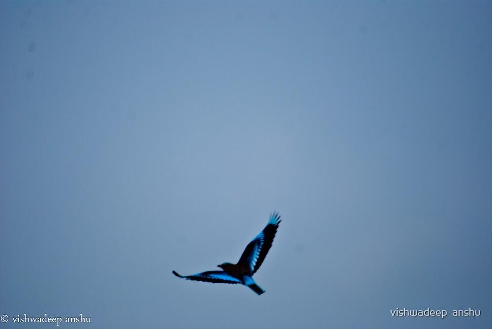 flight of india roller by vishwadeep  anshu