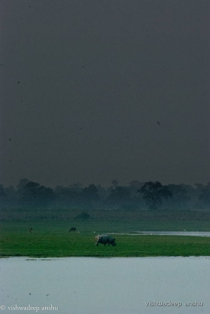 the rhino by vishwadeep  anshu