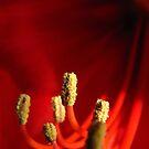Growing red by Katarina Kuhar