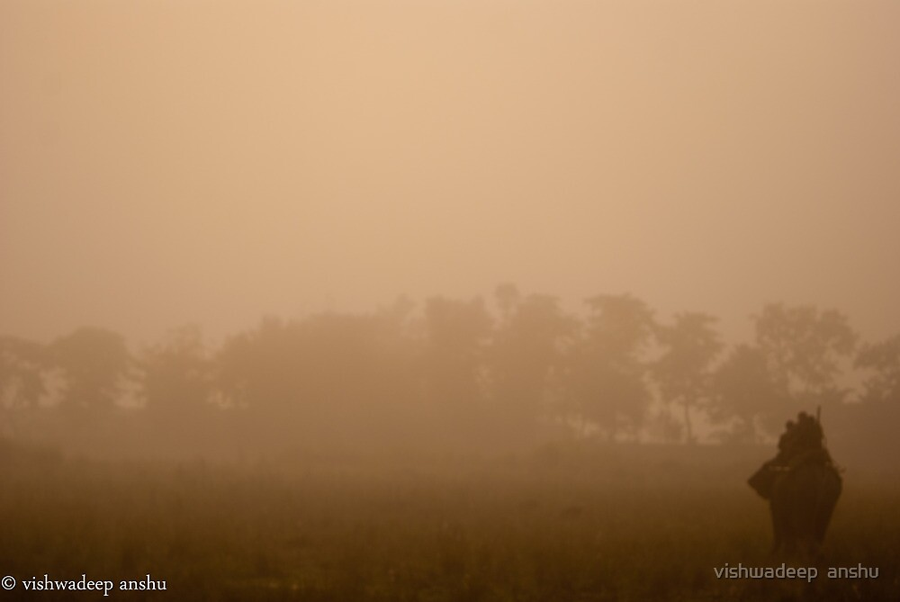 morning elephant safari by vishwadeep  anshu