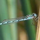 Damsel in Blue by Rick Playle