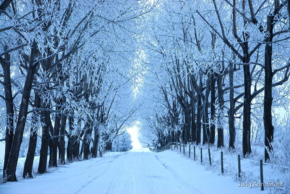 Winter Drive 2010 by Judy Ann  Grant