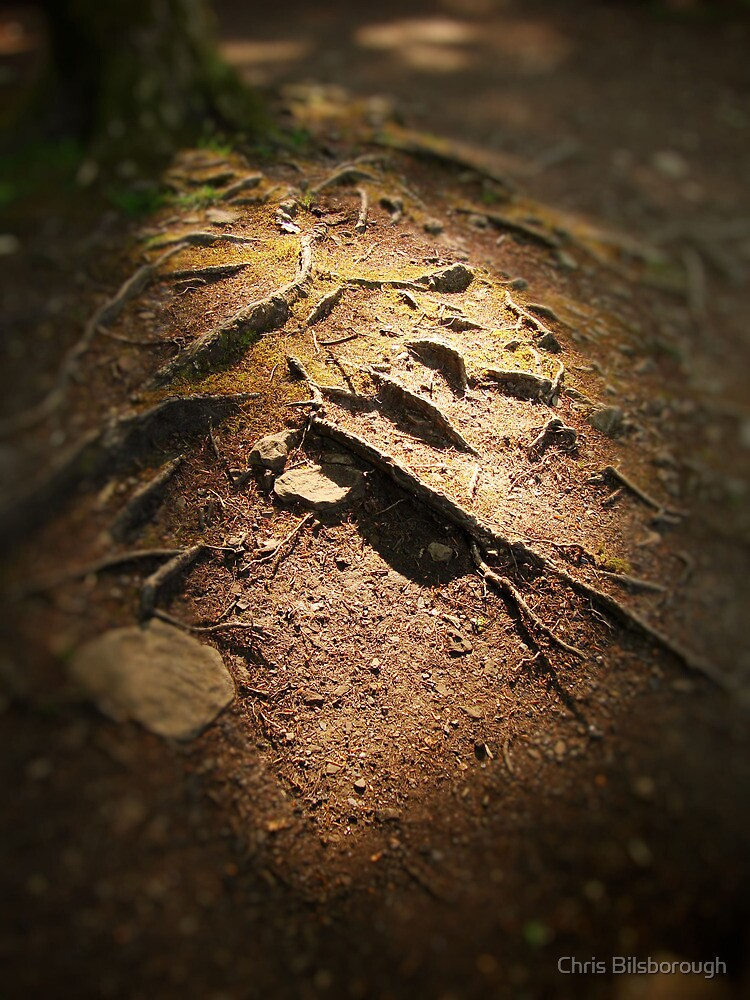 Highlighted Roots by Chris Bilsborough