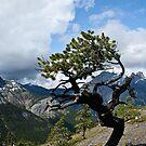 Alpine Tree's by Justin Atkins