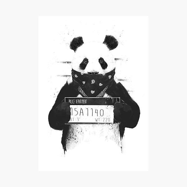 Bad panda Photographic Print