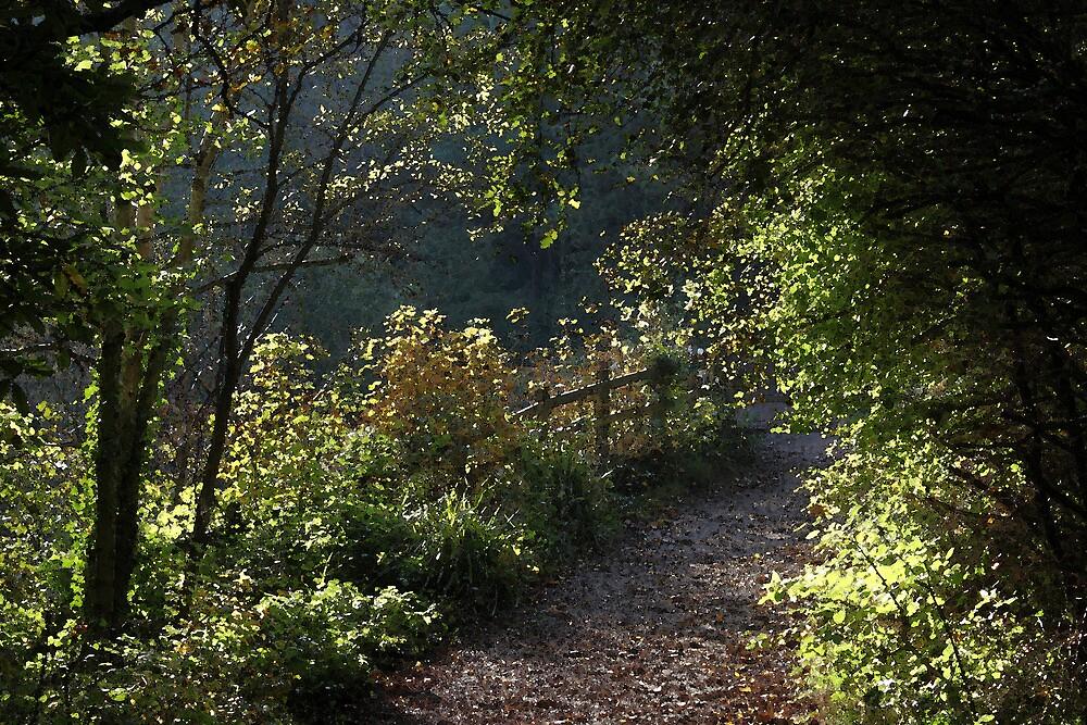 Woodland walk by JackVane
