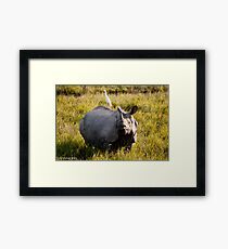 rhino and the bird Framed Print