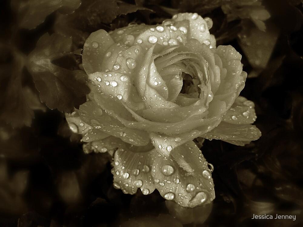 Sepia Rose by Jessica Jenney