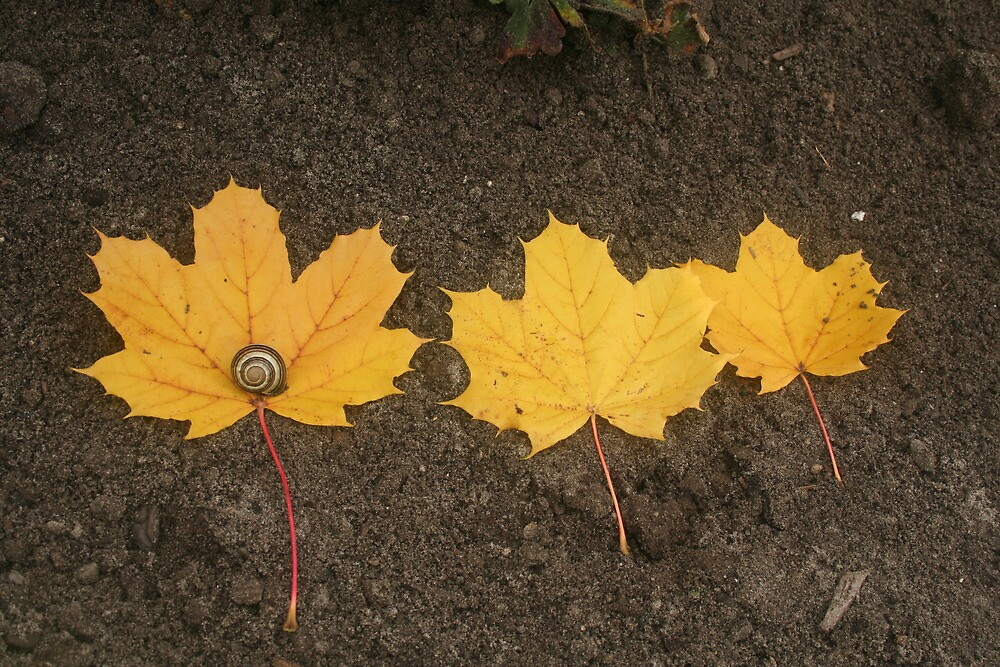 Three Yellow Leaves with Snail by cindyh