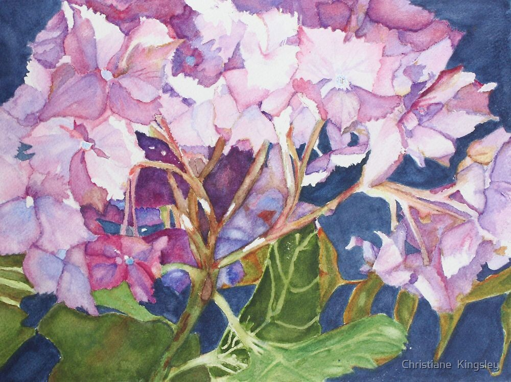 Hydrangea Jewels by Christiane  Kingsley