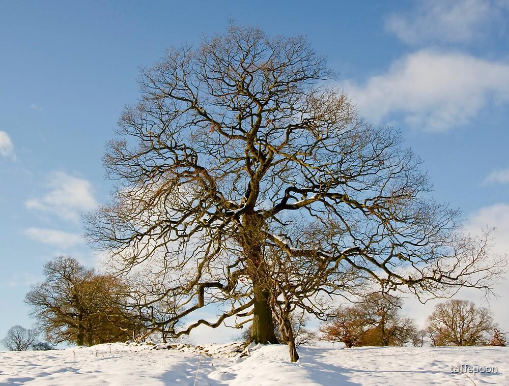 Winter Snow Scene by taffspoon