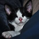 """ Catnip Nap "" by CanyonWind"