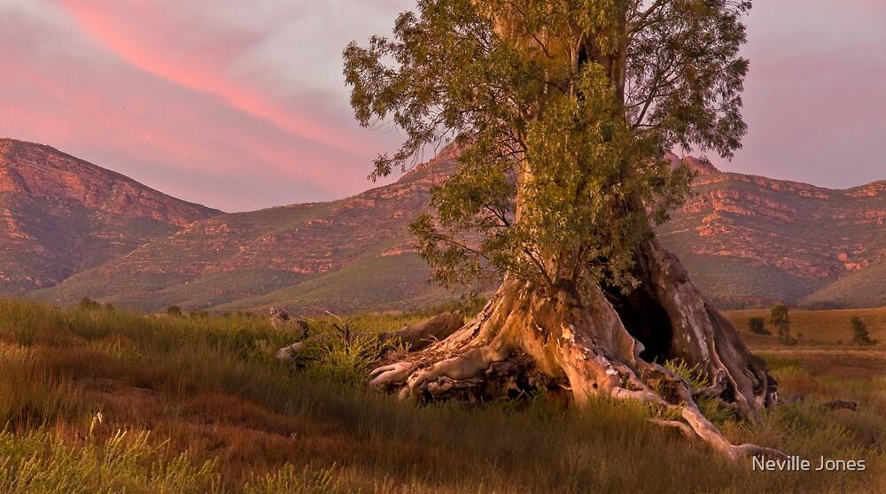Cazneaux Tree at Dawn. by Neville Jones