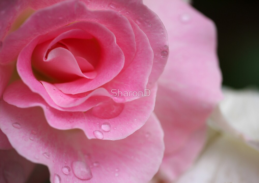Pink Ice by SharonD