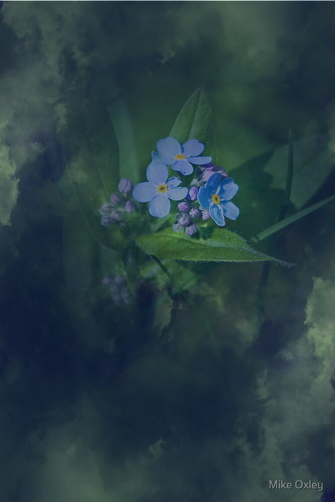 Forget me not......please? by Mike Oxley