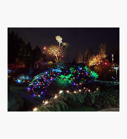 Night In The Sunken Garden (9) Photographic Print