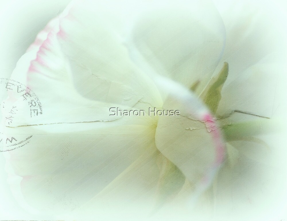 I Sent You A Letter.... by Sharon House