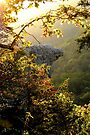 Sunrise , framing the Hawksbill Crag by NatureGreeting Cards ©ccwri
