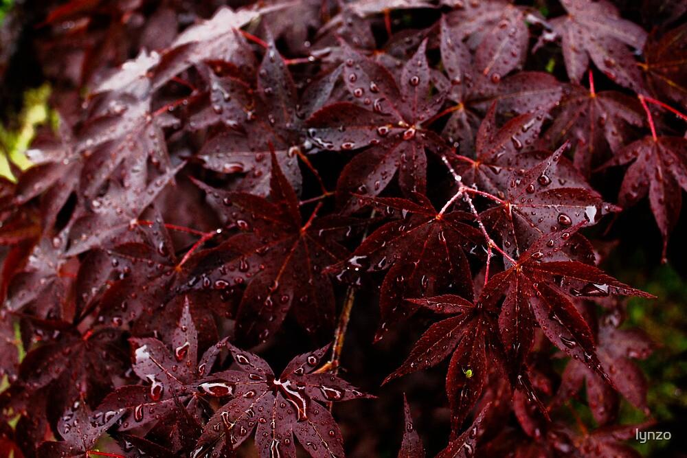 Rainy Leaves by lynzo
