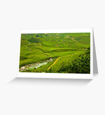 Rice fields Greeting Card