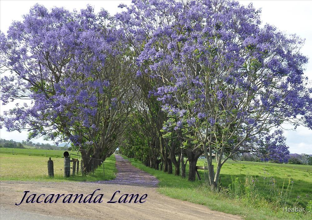 Jacaranda Lane by Heabar