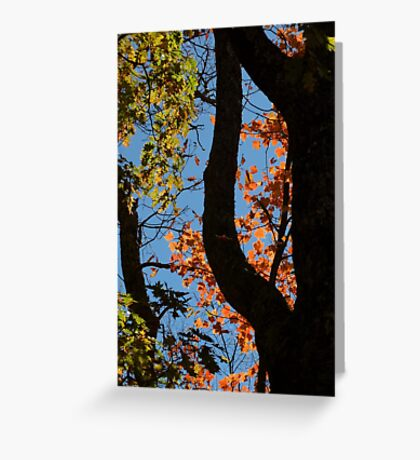 Leaf Portal Greeting Card