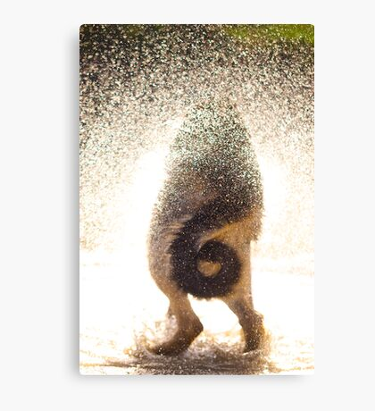 Wet Tail Canvas Print