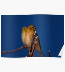 Gold Finch Book Ends Poster
