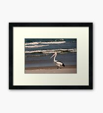 Beach Pelican Framed Print