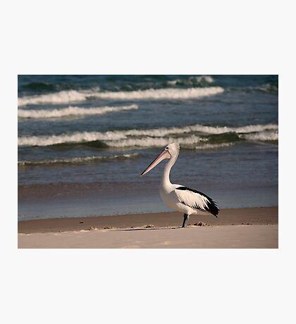Beach Pelican Photographic Print