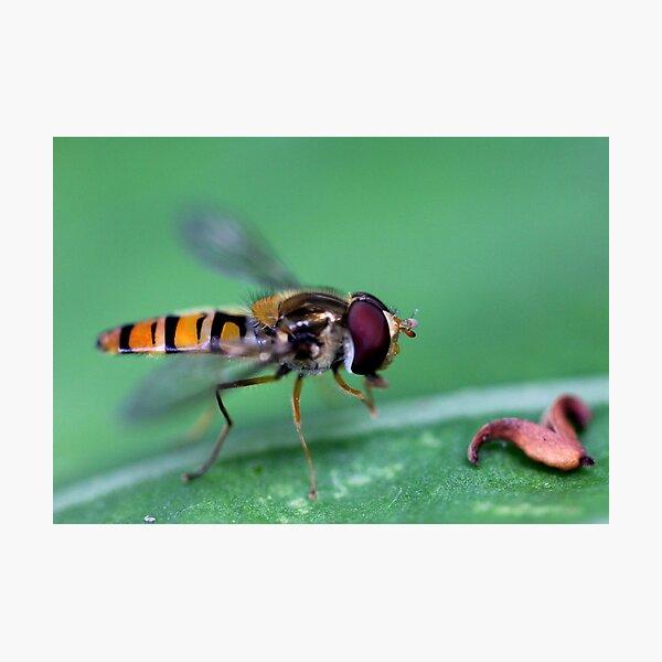 Bug hunt 1 Photographic Print