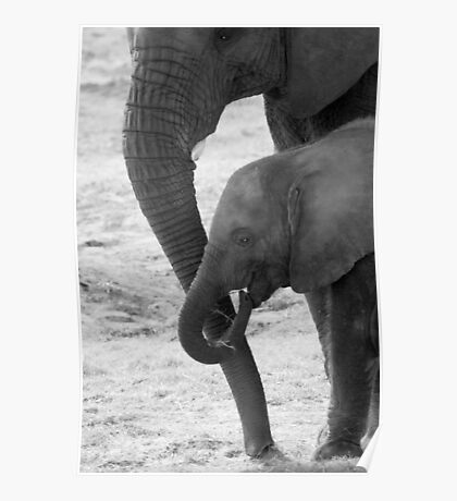 """""""Trunkated"""" - mother and baby elephant Poster"""