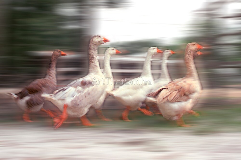 """""""Wild Goose Chase"""" - geese running wild by ArtThatSmiles"""