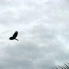 Wings  by Akash Puthraya