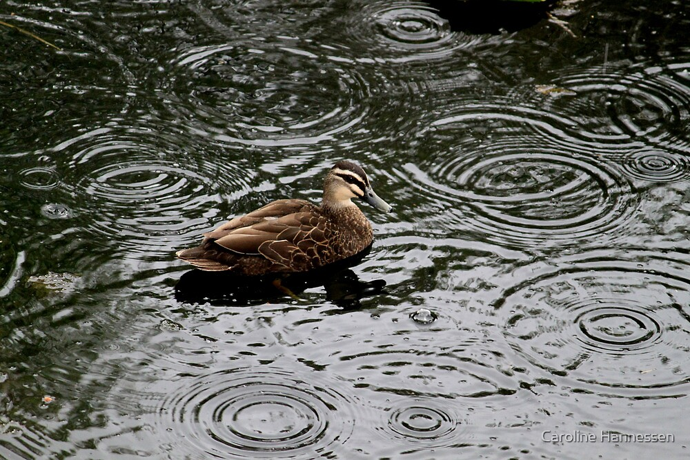 Rainy duck by Caroline Hannessen