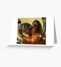 funnel web Greeting Card
