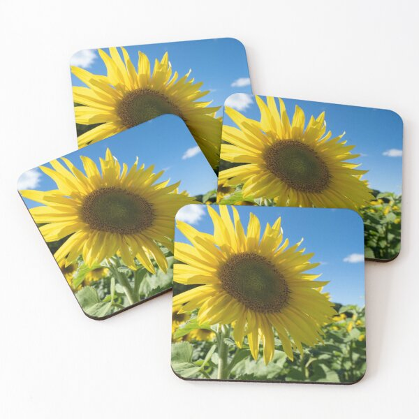 Sunflower Coasters Redbubble