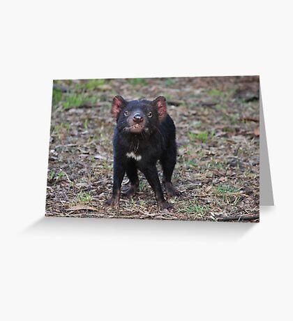 Tasmanian Devil (2) Greeting Card