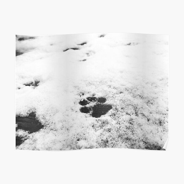 Dog Paw Print - Black And White Poster
