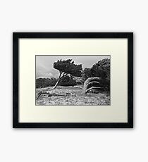 trees at Jenkins' Point Framed Print