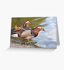 Male Mandarin Ducks at Martin Mere Wetland Centre Greeting Card