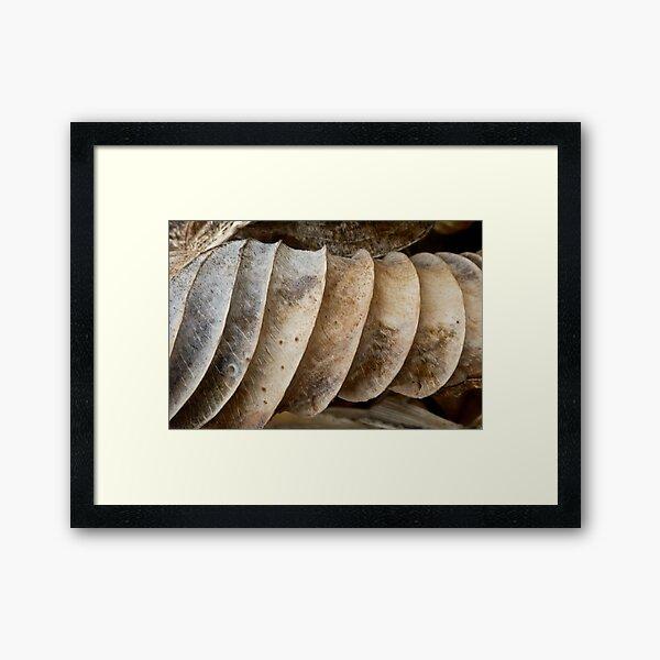 Rolled Framed Art Print