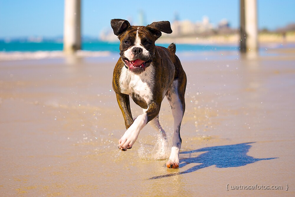 Carla running on the beach by { wetnosefotos.com  }