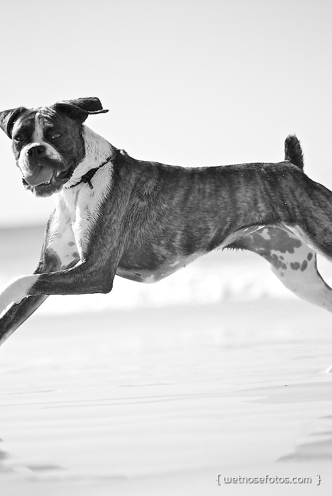 I believe I can fly! by { wetnosefotos.com  }