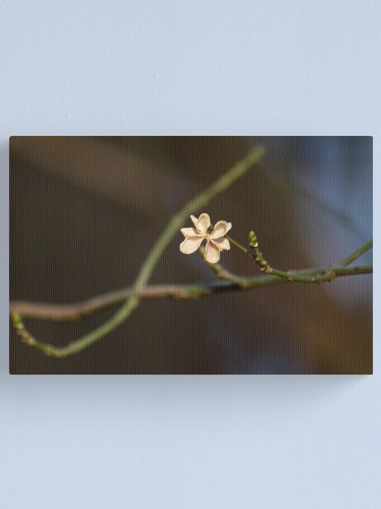 Alternate view of Spent Spindle Canvas Print