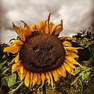 Happy Sunflower  by TheTeaFairy