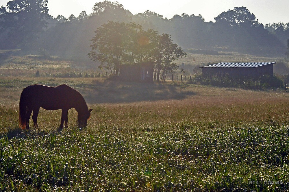 Morning Grazing by Jack Thomas